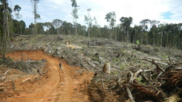 http-_www.confectionerynews.com_Commodities_United-Cacao-faces-deforestation-claims