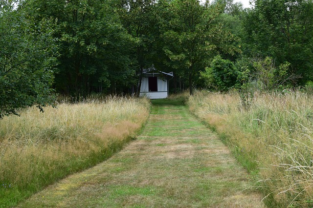 A mowed path leading to a shed, bordered by grassy unmowed areas and a treeline. mowing, habitat, wildlife, rotational mowing, lawn, overwintering