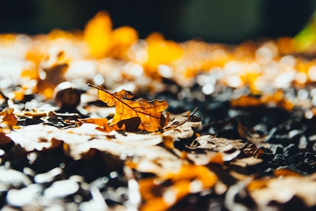 How Leaves Help Your Yard and Wildlife!