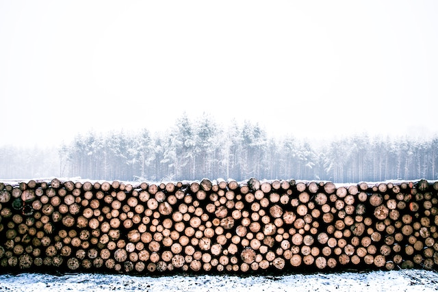 rayon, fashion and deforestation, clothing, viscose. A huge stack of trees in front of a ghostly forest