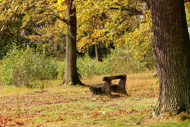 leaf litter, leaves, soil, rake. Wooden bench under large trees facing a field with shrubs. Golden leaves on trees, fallen leaves and sticks on the ground, an open woods in the background.