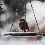 Why Birds Need Fresh Water in Winter