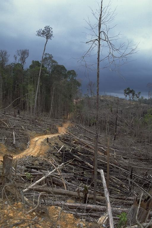palm oil, tropical forests, deforestation, sustainability
