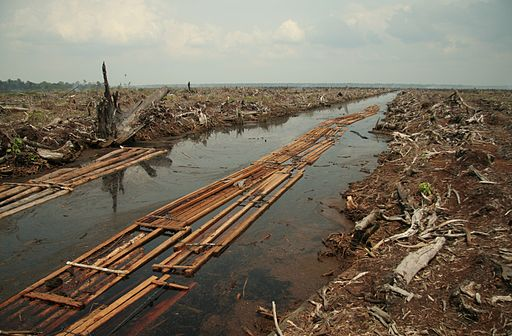 sustainable palm oil, Southeast Asia, tropical forests, RSPO, deforestation