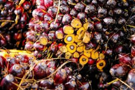 Palm Oil and Sustainability, An Update (Part 1)