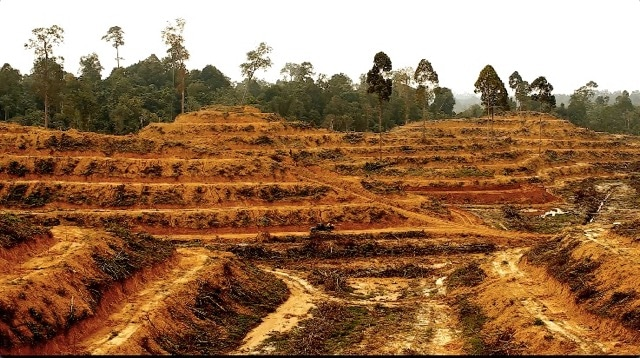 palm oil, RSPO, sustainable palm oil, NDPE, deforestation