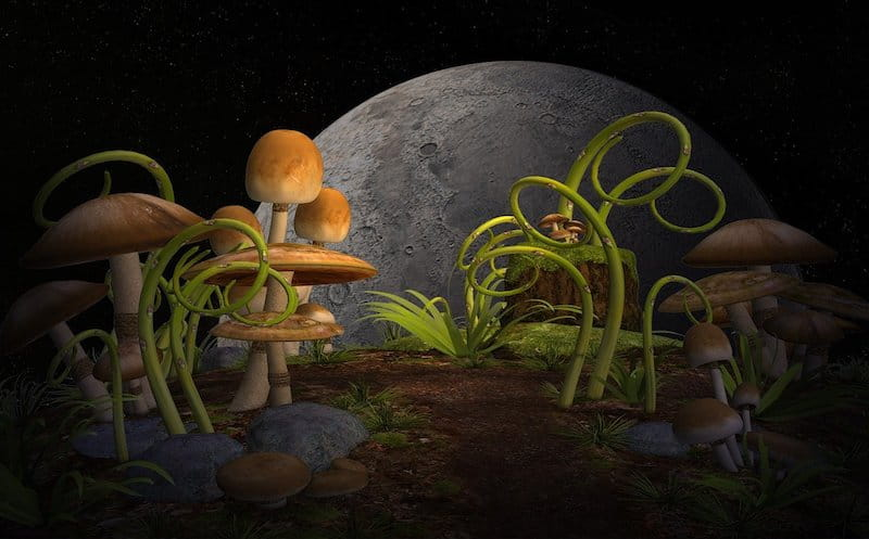 The Afterlife, Part 1. Mushrooms, grasses, rocks and soil