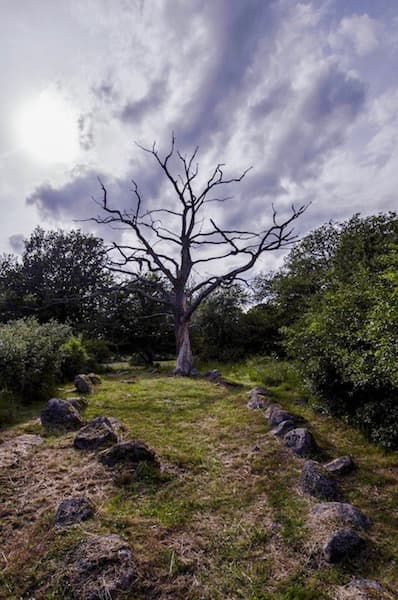 natural burial ground with trees and stones